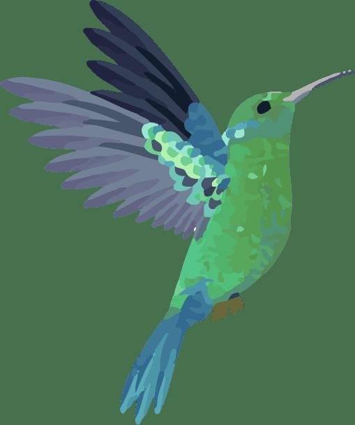 HummingBird-12 Opens in new window